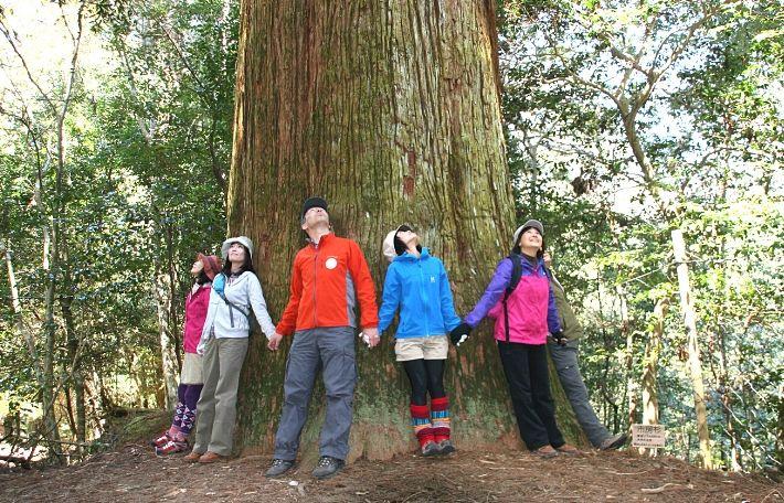 市房杉|日本で最も豊かな隠れ里 日本遺産人吉球磨【熊本県】